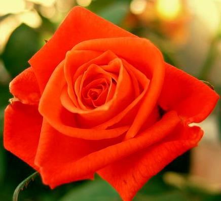 Роза Луи де Финес